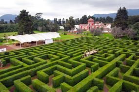 Bosque de Arboles de Navidad y Hacienda Panoaya