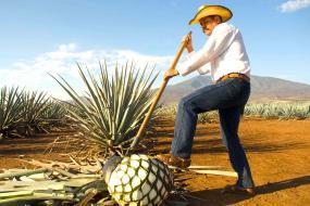 Guadalajara, Tequila, Tlaquepaque, Chapala, Tonala y Morelia