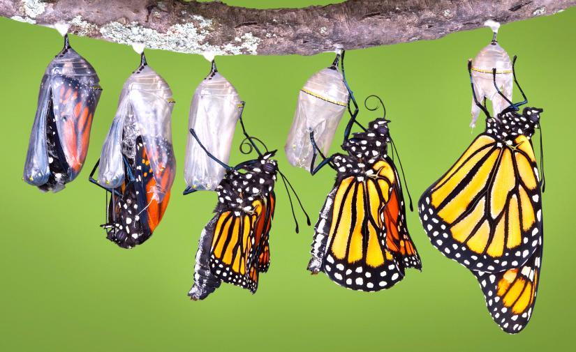 """Mariposa Monarca """"Santuario del Rosario"""" y Valle de Bravo"""